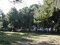 Pescara Riserva naturale Pineta di Santa Filomena04.JPG