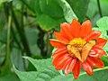 Phuket Butterfly Garden 2.jpg