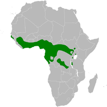 Phyllastrephus scandens distribution map.png