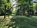 Picnic area, Haldon Forest Park - geograph.org.uk - 814745.jpg