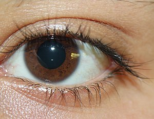 English: picture of brown eyes