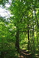 Pidhorodne-modryna-n1-15058004.jpg