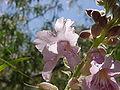 Pink tree flower aradecki.jpg