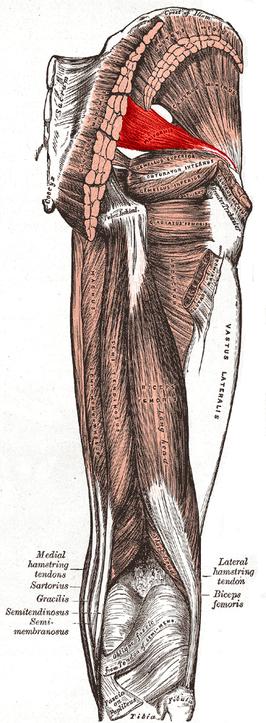 Musculus piriformis laufen