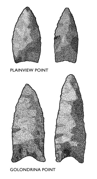 Golondrina point - Comparison of Golondrina and Plainview points. Both styles date to Late Paleoindian times and share similar lanceolate shapes.