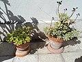 Plants234.JPG
