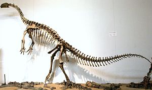 "Plateosaurus - Mounted skeleton of P. engelhardti (GPIT ""Skelett 2""), consisting of two individual specimens from the Trossingen Formation, museum of the Institute for Geosciences (GPIT) of the Eberhard-Karls-University Tübingen, Germany"