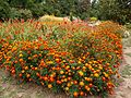 Poltava Botanical Garden (162).jpg