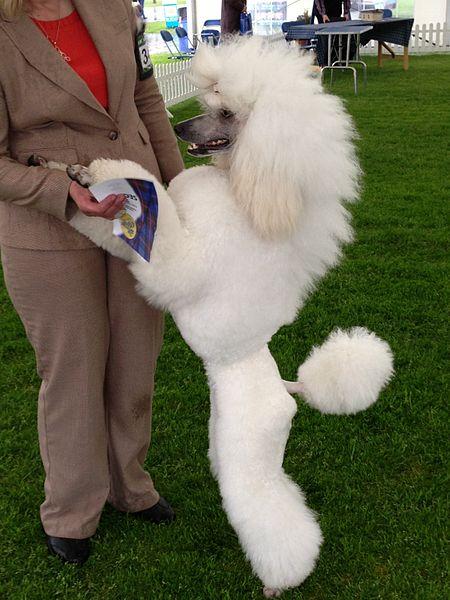 Splash Dog Grooming Broulee