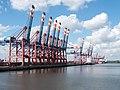 Portainers, WPAhoi, Waltershofer Hafen, Hamburg (P1080572).jpg