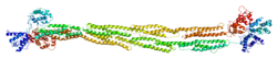 Protein ACTN1 PDB 1sjj.png