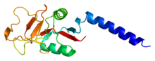 Protein MBL2 PDB 1hup.png