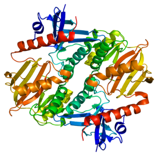 Synapsin 2 protein-coding gene in the species Homo sapiens