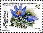 Pulsatilla halleri. Stamp of Macedonia.jpg