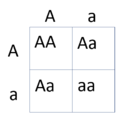 Punnett Square Genetic Carriers.PNG