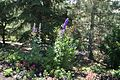 Purple Flowers at Thanksgiving Gardens near Lehi, Utah.jpg