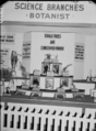 Queensland State Archives 1784 Department of Agriculture and Stock displays at the annual exhibition of the Royal National Association Brisbane August 1955.png