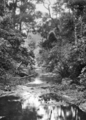 Queensland State Archives 418 Morans Creek Lamington National Park Beaudesert Shire September 1933.png