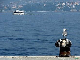 Rías Baixas - A seagull surveys the Ria de Vigo