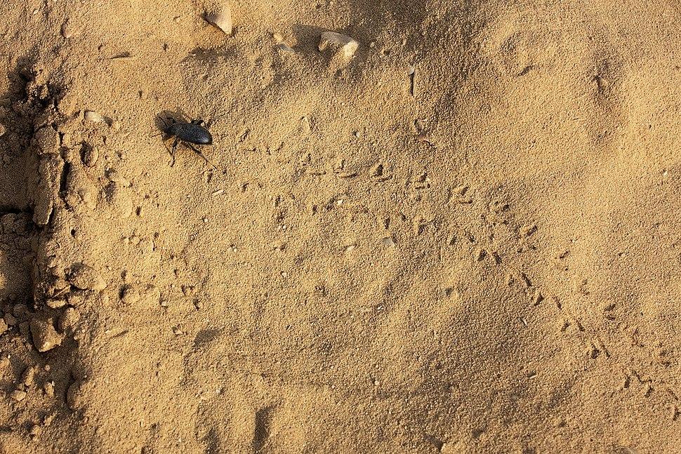 Raduejvac sands