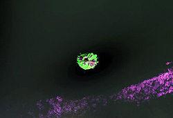 Raikoke Landsat.jpg