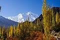 Rakaposhi & Autumn.jpg