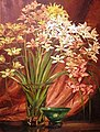 Ranken Cymbidium Orchids 1935.jpg