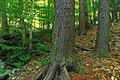 Ravine Forest (2) (14987752817).jpg