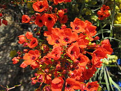 Red flowers in Botanic Garden.jpg