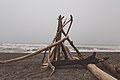 Redwood Beach Firewood, California (31823836491).jpg