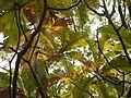 Revada (Telugu- రేవడ) (8460742535).jpg