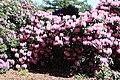 Rhododendronpark Bremen 20090513 031.JPG