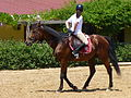 Riding a Horse Backwards 1110787.jpg