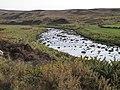 River Halladale - geograph.org.uk - 166417.jpg