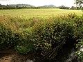 River Parrett at Creedy Bridge - geograph.org.uk - 1503750.jpg