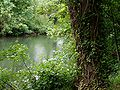 River Thames at Cliveden.jpg