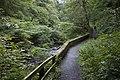 Riverside Path, Colinton dell - geograph.org.uk - 1469845.jpg