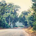 Road of peace.jpg