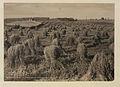 Robert Smith's Long Lake Farm, Edmonton, District (HS85-10-23381).jpg