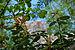Rombergpark-100516-13077-Oldenburg.jpg
