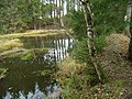 Rovný - rybník.JPG