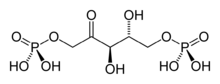 Skeletal formula of RuBP