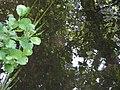 Ruisseau Roule-Crottes reflets.JPG