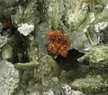 Rutile-Muscovite-270308.jpg