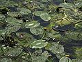 Rybník Březina (019).jpg