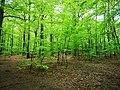 Söderåsen landscape green forest.jpg