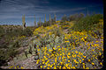 Saguaro National Park SAGU4646.jpg
