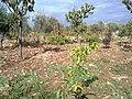 Salt Qasabah District, Jordan - panoramio (3).jpg