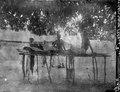 Salutorget. Ett stånd under mangoträd. Mevarano. Madagaskar - SMVK - 021891.tif