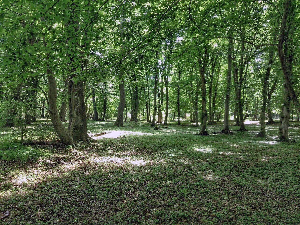 Фото леса и реки